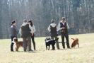37 Hunde an die Leine