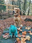 Raya-Geburtstag
