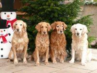 weihnachten_2012